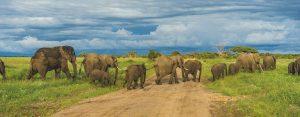 aanbieding-safari-tanzania