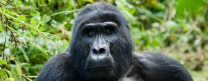 vakantie-uganda